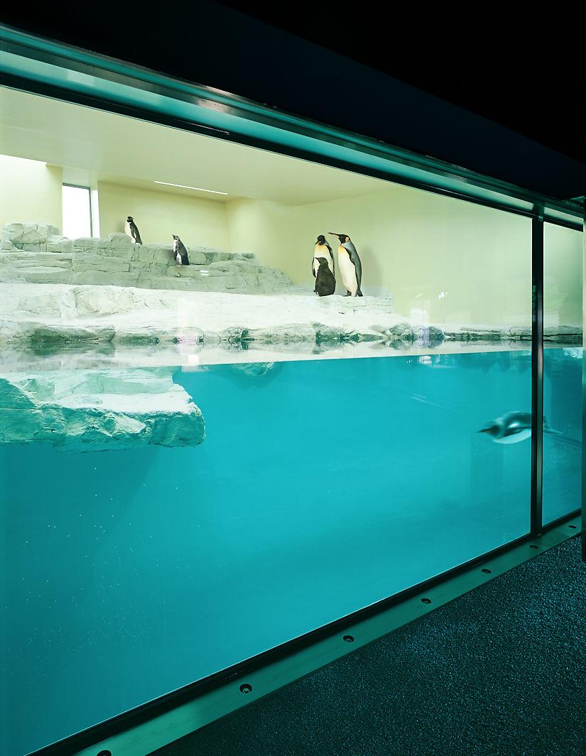 Polarium: Penguins Pool