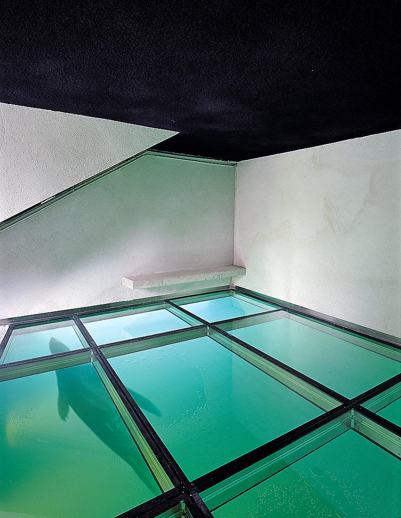 Polarium: Glass Floor
